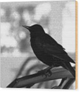Black Bird Bw Wood Print