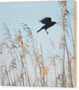 Black Bird In Cat Tails Wood Print