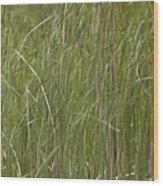 Black Bird In Cattails Wood Print