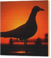 Black Bird Red Sky Wood Print