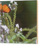 Black-bordered Tegosa Recinto Del Pensamiento Manizales Colombia Wood Print