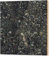 Black Bubbles Wood Print