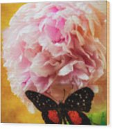 Black Butterfly On Peony Wood Print