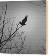 Black Buzzard 1 Wood Print