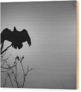 Black Buzzard 2 Wood Print