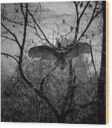 Black Buzzard 3 Wood Print