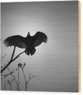 Black Buzzard 5 Wood Print