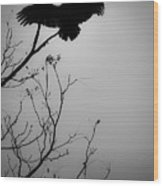 Black Buzzard 6 Wood Print