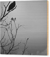 Black Buzzard 7 Wood Print