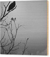 Black Buzzard 7 Wood Print