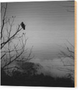 Black Buzzard 9 Wood Print