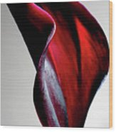 Black Calla Lily Wood Print