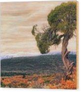 Black Canyon Juniper - Colorado - Autumn Wood Print