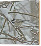 Black Capped Chickadee - Poecile Atricapillus Wood Print