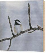 Black-capped Chickadee, Alberta Wood Print