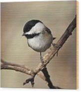 Black-capped Chickadee Portrait Wood Print