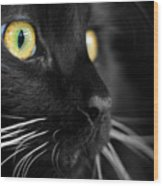 Black Cat 2 Wood Print by Craig Incardone