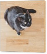 Black Cat Looking At You Wood Print