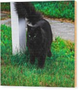 Black Cat Maine Wood Print