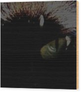 'black Cats Eye' Wood Print