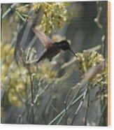 Black Chinned Hummingbird In Flight Wood Print