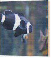 Black Clown Fish Wood Print