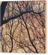 Black Cotton Wood Print