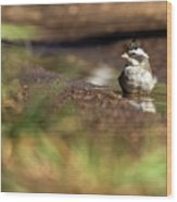 Black-crested Finch Wood Print