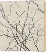 Black Crested Titmouse Wood Print