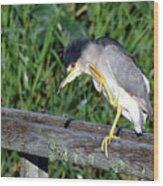 Black Crown Night Heron Scratching Wood Print