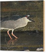 Black Crowned Knight Heron Wood Print