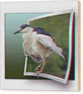 Black Crowned Night Heron - Use Red-cyan 3d Glasses Wood Print
