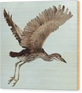 Black Crowned Night Heron 3junenile Roger Bansemer Wood Print