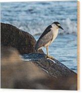 Black Crowned Night Heron B3975 Wood Print