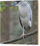 Black Crowned Night Heron IIi Wood Print