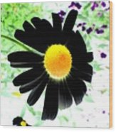 Black Daisy Wood Print