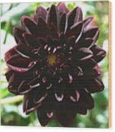 Black Dalia  Wood Print