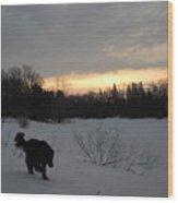 Black Dog Exploring Snow At Dawn Wood Print