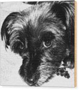 Black Dog Looking At You Wood Print