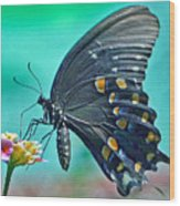 Black Eastern Swallow Tail Wood Print