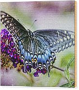 Black Eastern Swallowtail Wood Print
