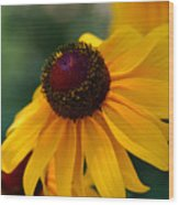 Black Eye Susan Wood Print