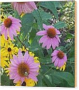 Black Eye Susans And Echinacea Wood Print