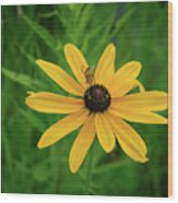 Black Eyed Susan And Friends Wood Print