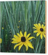Black Eyed Susan And Tall Grass Wood Print