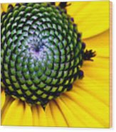 Black Eyed Susan Goldsturm Flower Wood Print