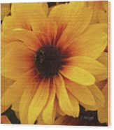 Black Eyed Susan Medley V3 Wood Print