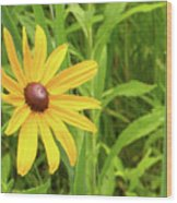 Black Eyed Susan V Wood Print