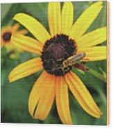 Black-eyed Susan With Soldier Beetle  Wood Print