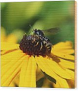 Black Eyed Susan With Wasp Wood Print